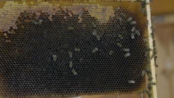 apiculteur marquant les abeilles qui travaillent dur