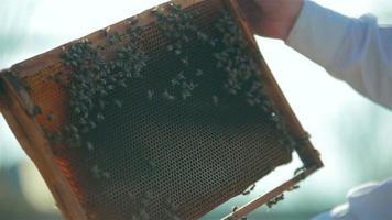 Cadre de contrôle de l'inspection des apiculteurs dans le rucher avec du miel d'abeille