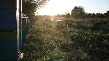 Beehive at Sunset. Bees, Hive, Honey, Apiary video