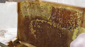 un apicoltore che usa un coltello per tagliare la cera dal telaio da vicino