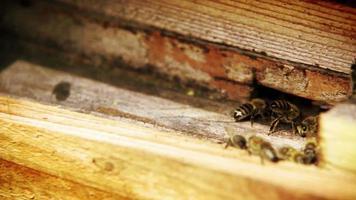 abeilles volant dans et hors de leur ruche après avoir apporté le miel