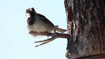 pássaro na casa da árvore video