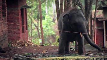 elefante video