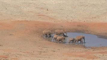 Group of elephants at a waterhole