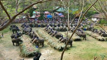 grupo de elefante comendo frutas no dia nacional do elefante tailandês