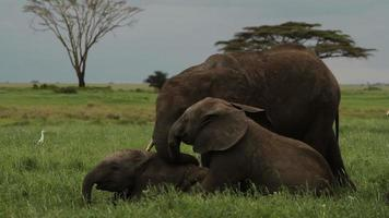 Elefantenbaby spielen.