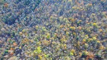 video di drone aereo fogliame autunnale