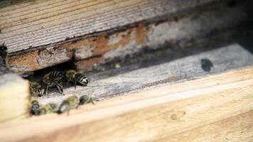 entrée de la ruche. les abeilles entrent et sortent. couple d'abeilles ventilant constamment la ruche par les ailes