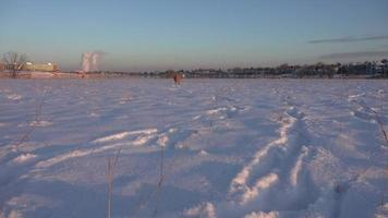 hond loopt op lage camera in de sneeuw