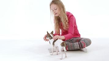 fille et chien chihuahua
