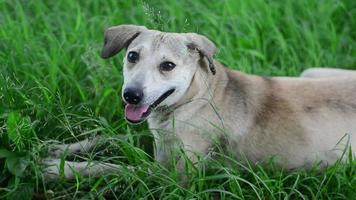 lindo perro tumbado en la hierba