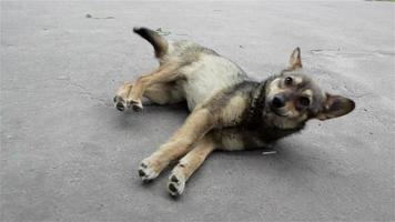 cane sdraiato sulla strada