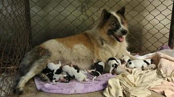 cuccioli appena nati. video