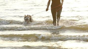 husky dog walking on a water on the beach slow motion