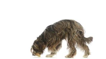 cane incrocio raccogliendo un osso