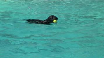 chien de natation
