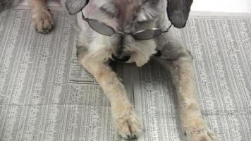 hd: chien lisant le journal