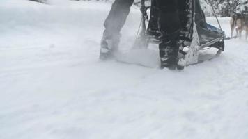 passeio de trenó puxado por cães em bosque nevado