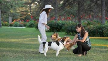 duas meninas brincando com cachorros