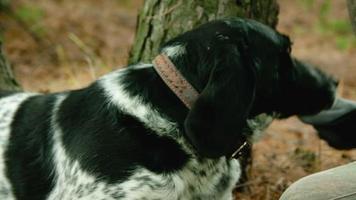 Meister streichelte seinen Hund roh