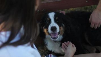 bellissimo cucciolo seduto vicino ai proprietari