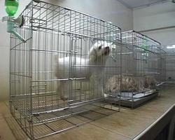 perro pequeño en jaula