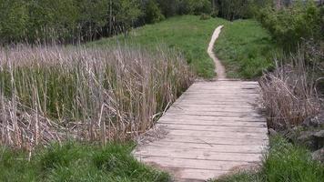 einen Dackel über einen Holzsteg laufen