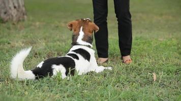 chien montre des tours