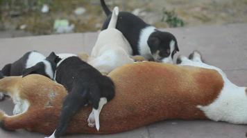 cane femmina che alimenta i suoi cuccioli