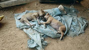 Paar Welpen schlafen auf einer Bodenplane