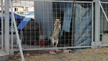 il cane abbaia dietro una staccionata