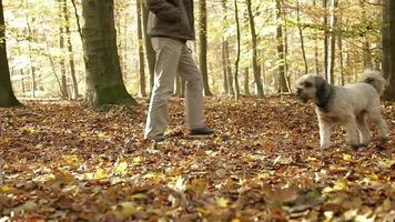 hombre paseando a los perros