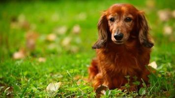 cane seduto sull'erba verde, davanti