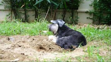 perrito negro tirado en el suelo