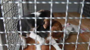 due cucciolo di cane in una gabbia per cani