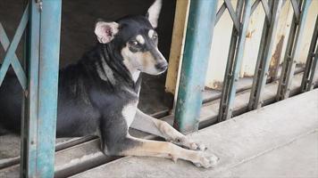 cane nero sdraiato sulla porta d'acciaio