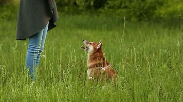 meisje speelt met hond shiba inu