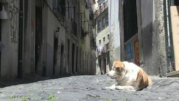 Dog in an alley