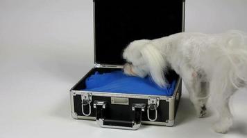 valise de voyage pour chiens