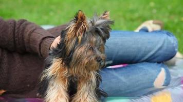 donna non identificata accarezzando yorkshire terrier