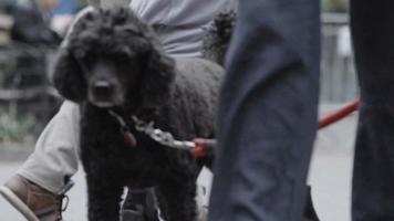 süßer Hund in einem Pullover - Nahaufnahme - Zeitlupe
