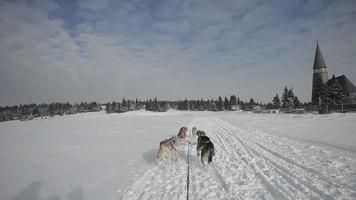 husky che corre sulla neve