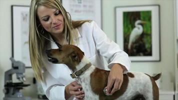 veterinario che controlla il cuore dei cani