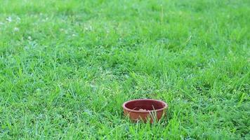 perro hambriento corre hacia el tazón con comida