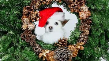 couronne de Noël de chien