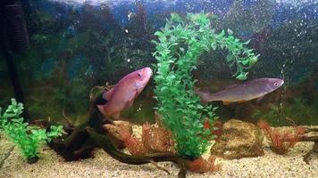 pesci, pesci d'acquario
