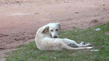 land hond
