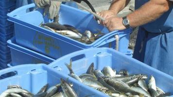 pesca comercial pescador pescador pescado em um barco nas docas de pesca