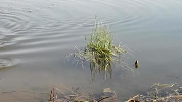 Angeln der Fische an Land
