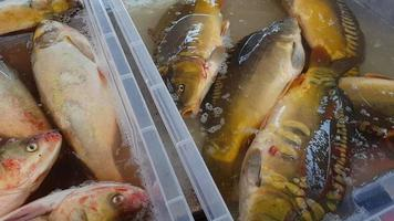 Freshwater fish at the fish market. video